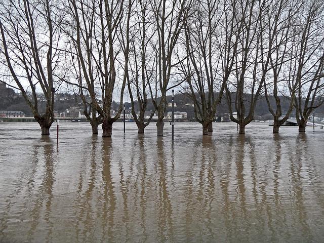 Straßenbäume stehen im Wasser