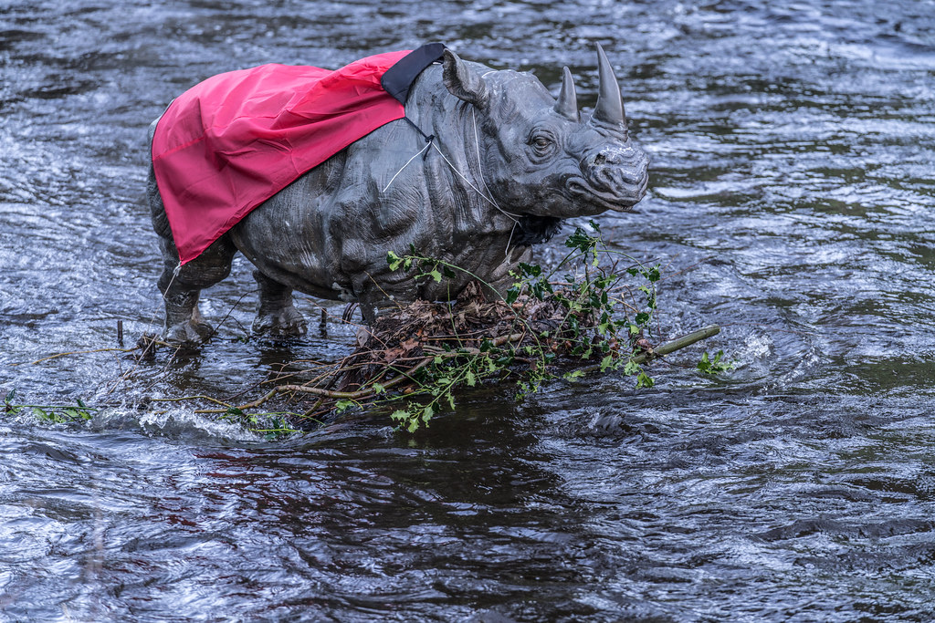 RHINO IN THE RIVER 001