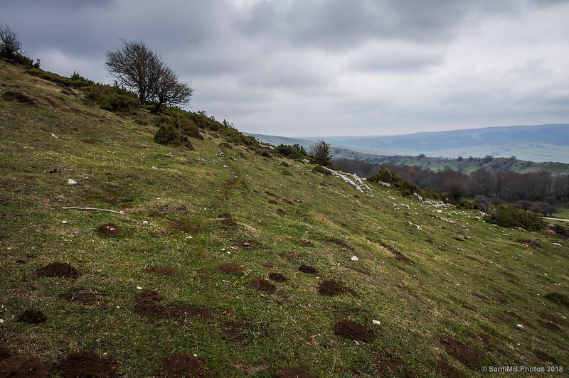 Vereda ganadera tras las crestas de Ollide