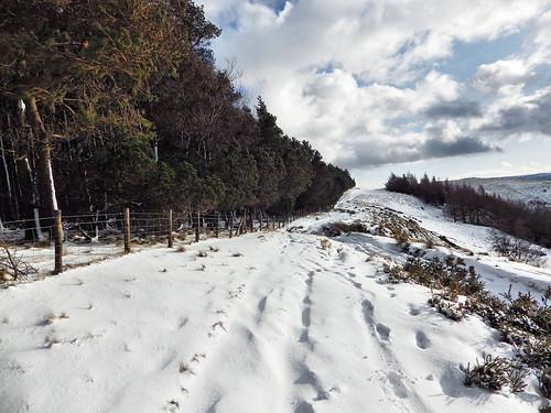 Following the Hagg Side treeline