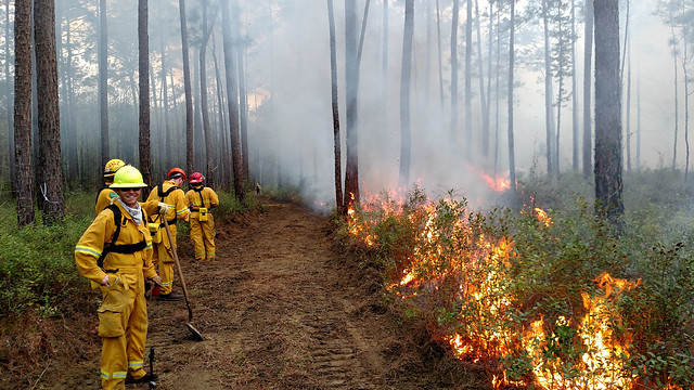 Forestry professionals participate in a prescribed burn field exercise.