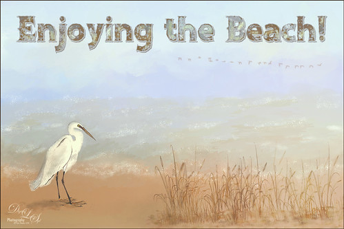 Image of an egret at the beach