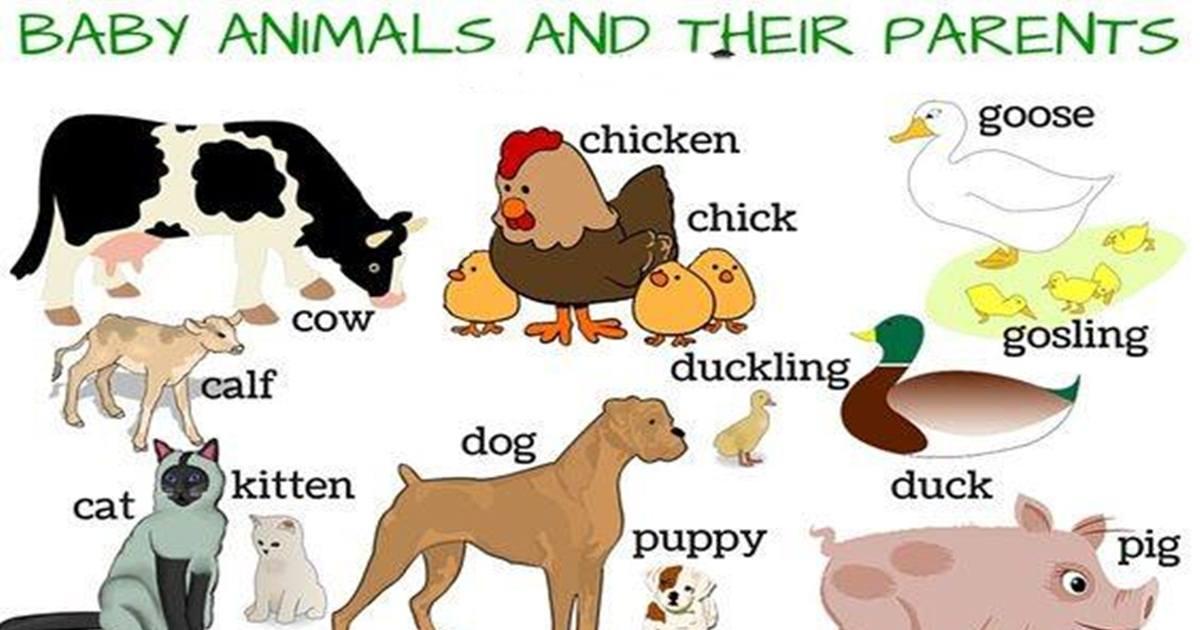 Baby Animals & Their Parents 5