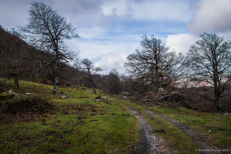 Camino pastoril por el norte del Artxueta