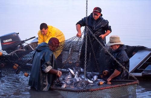 Fish farmers in Mississippi