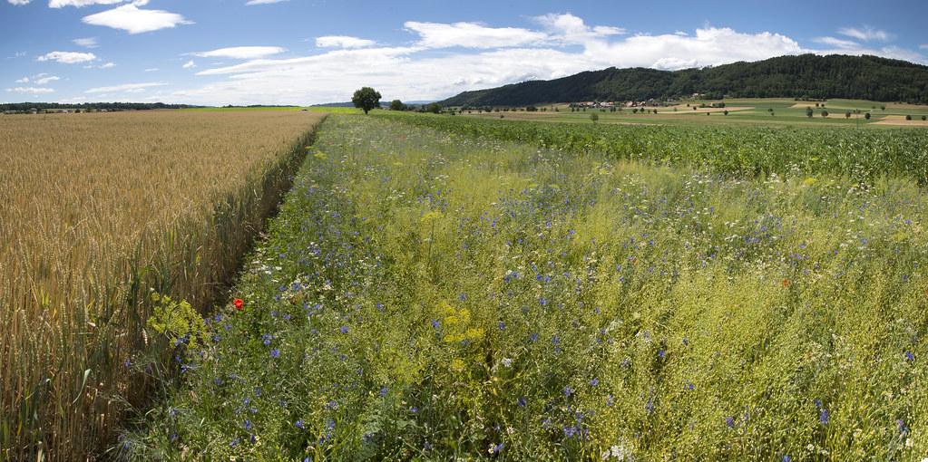 圖片來源:Agroscope, Gabriela Brändle(CC BY-ND 2.0)