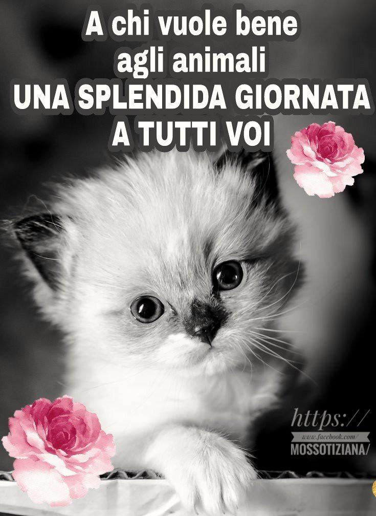 Buongiorno buona giornata lovecat gatto love amici for Immagini belle buongiorno amici