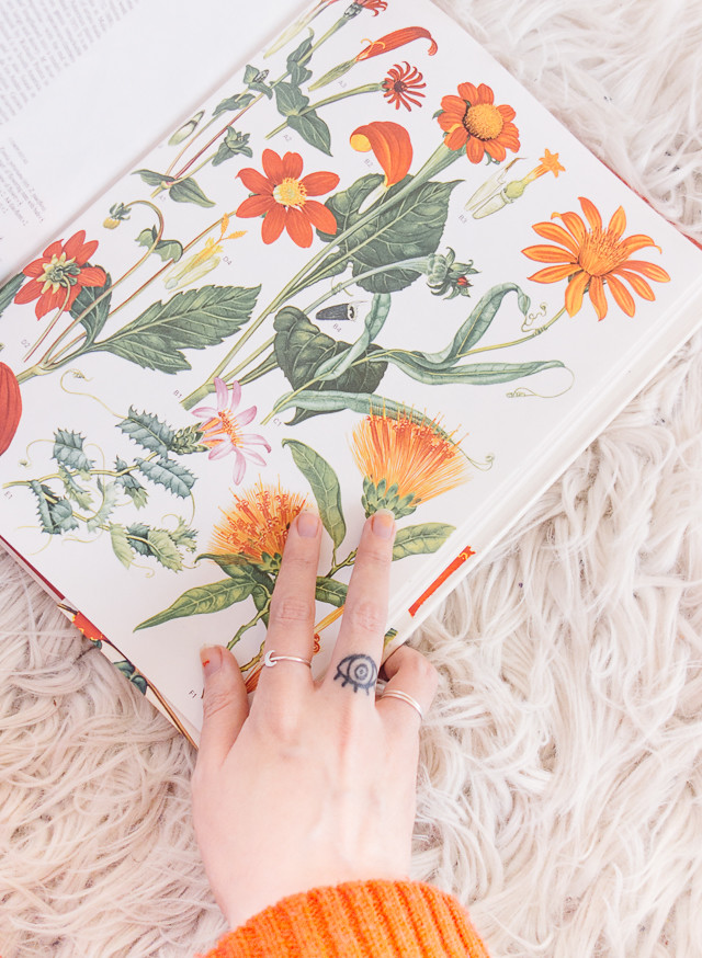 vintage botanical book with orange flowers