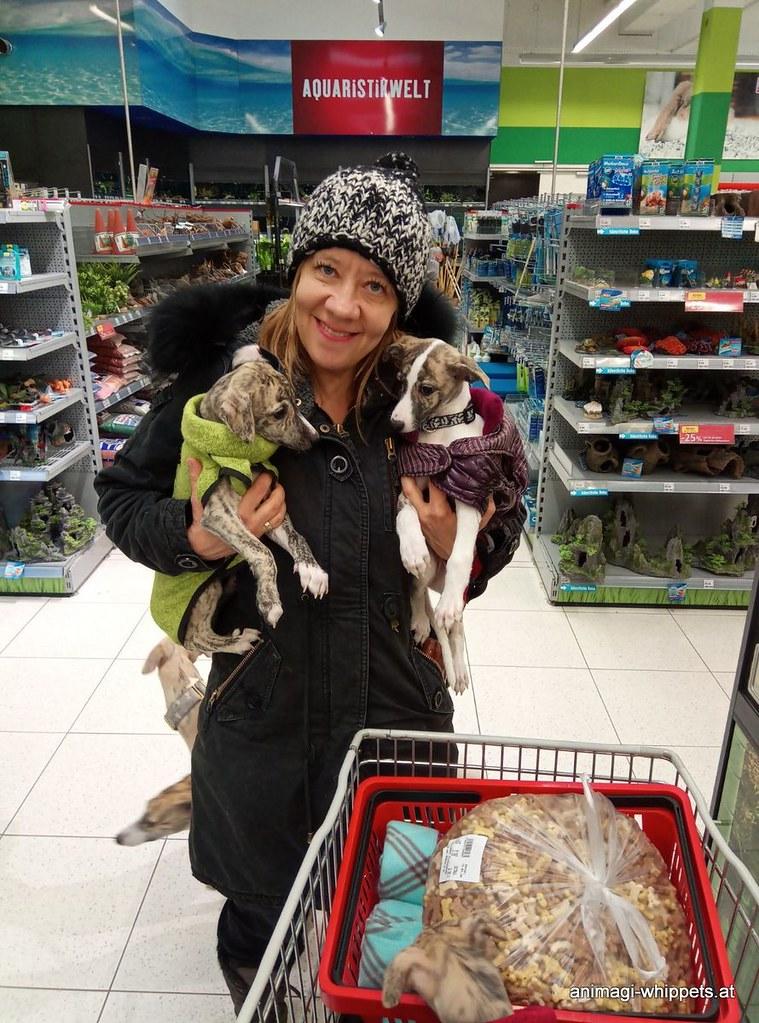 Shopping mit den Welpen, die Fressnapfverkäuferinnen waren verzaubert!