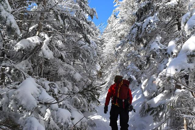 行者小屋~赤岳鉱泉 樹氷の登山道