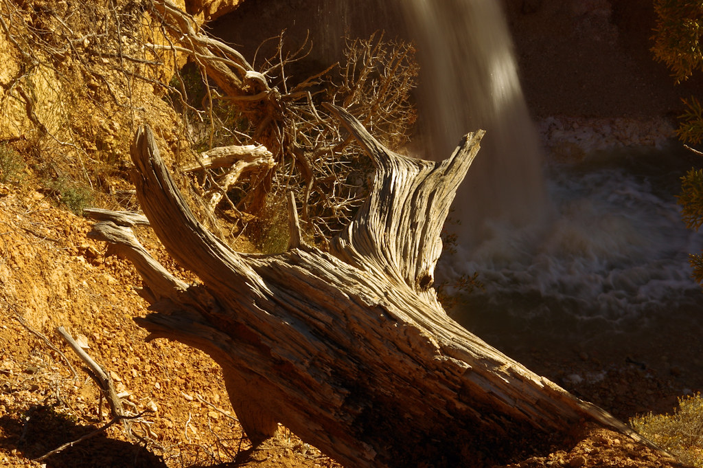 Dead wood above Water Canyon falls, Mossy Cave Trail, Bryce Canyon National Park, October 8, 2015 (Pentax K-3 II)
