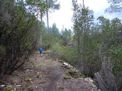 Le chemin du Carciara et ces nombreux soutènements en RG de la Figa Bona