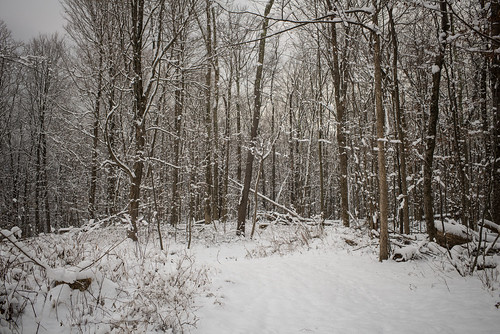 Snowy Woods, First Snow of Winter 2017 | by goingslowly