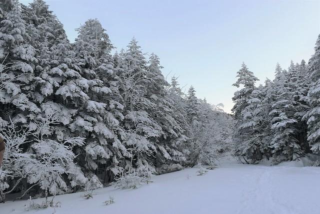 八ヶ岳の樹氷