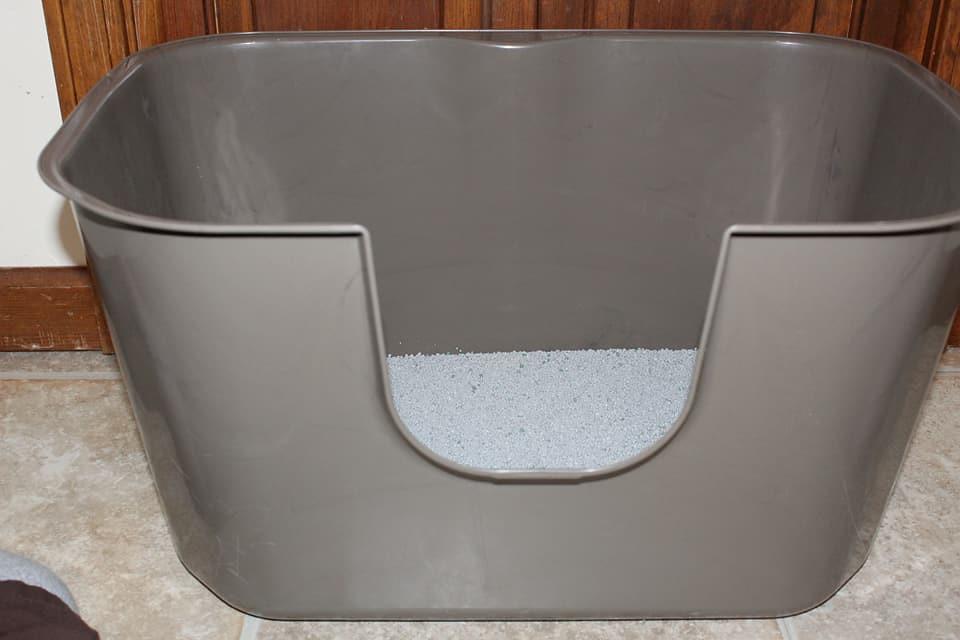 Brown NVR Miss Litterbox