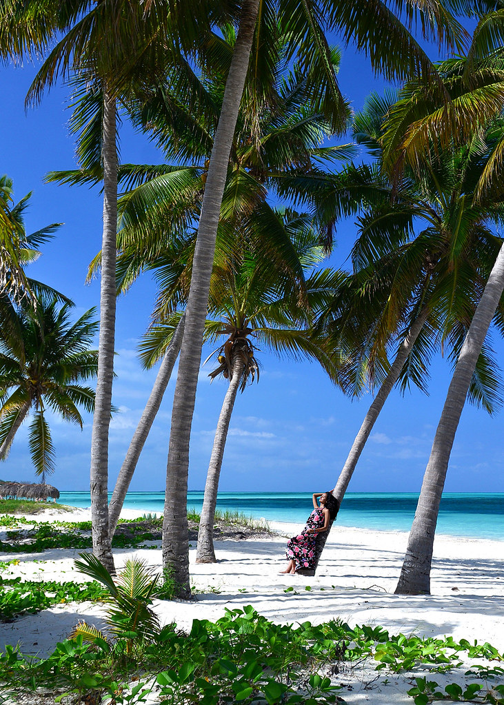 Posando sobre una palmera y aguas paradisíacas al fondo de color blanco