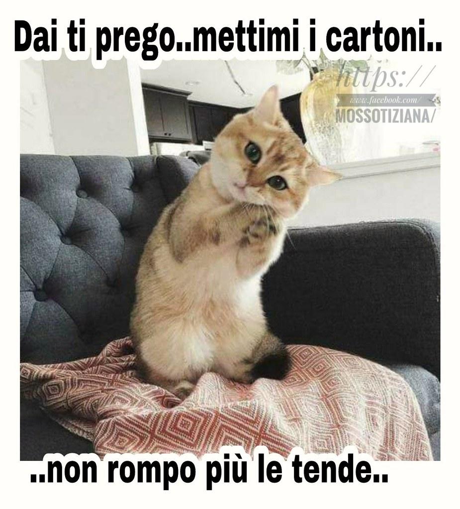 Link divertenti love cat tiziana mosso https www f for Buongiorno con gattini