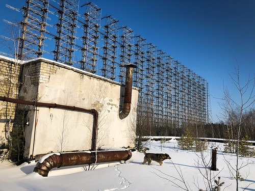 A dog at the Duga radar array in Chernobyl | by Documentally