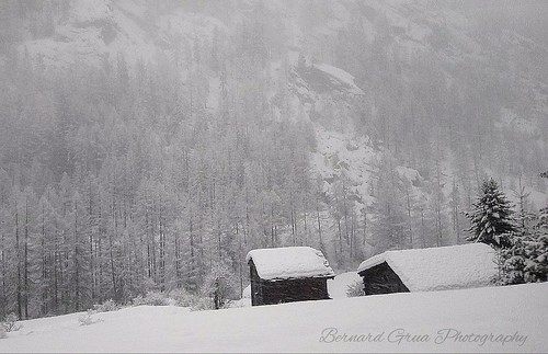 Under a heavy snow coat © Bernard Grua | by Photos de voyages, d'expéditions et de reportages