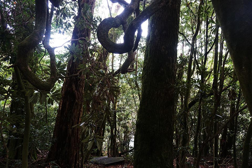整座山林樹木高大茂密直入天際