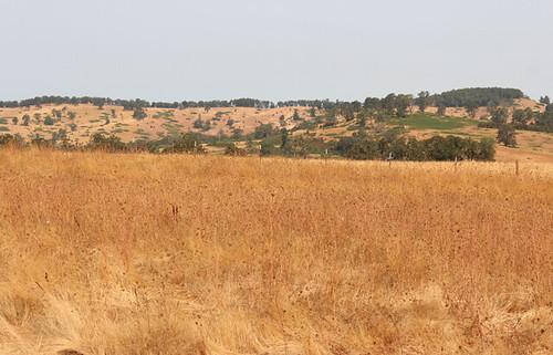 Jeff Baxter's pasture