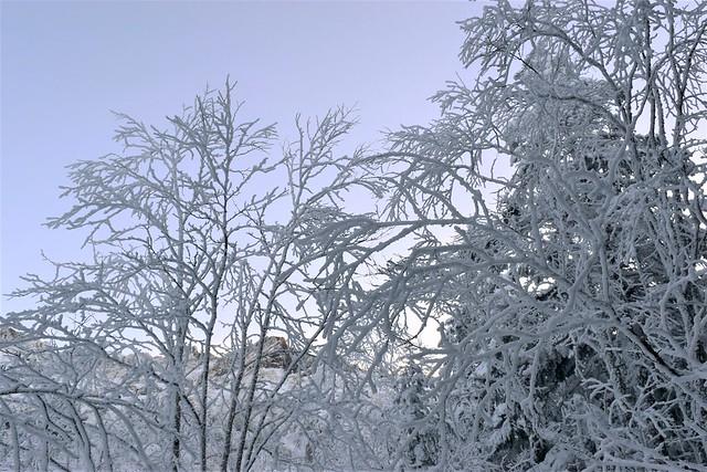 八ヶ岳の霧氷