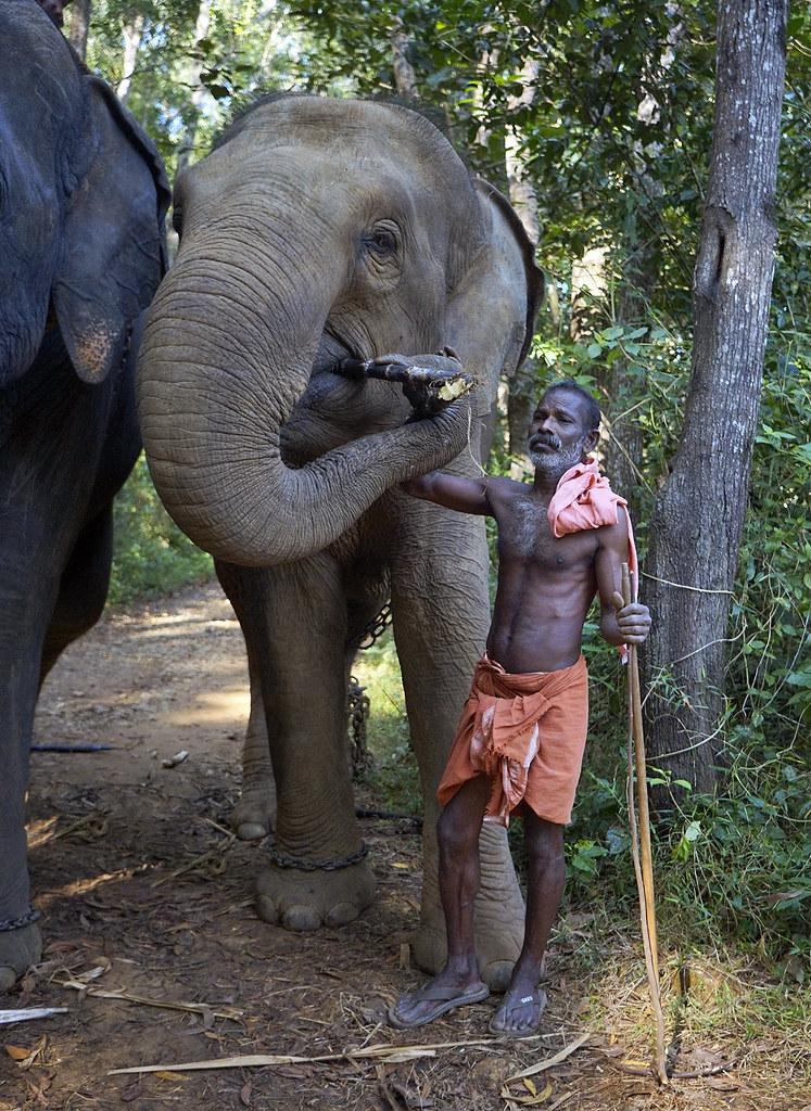 KERALA MAN & ELEPHANT 8121m | by opaxir