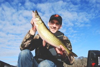 Photo of man holding up a chain pickerel