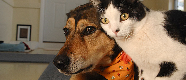 Cat To Dog Introduction
