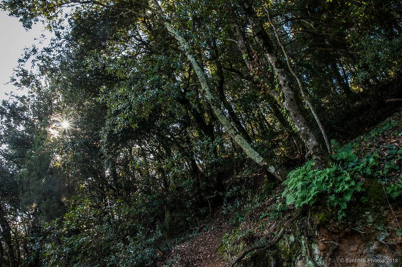 Subiendo al Castell de Montsoriu