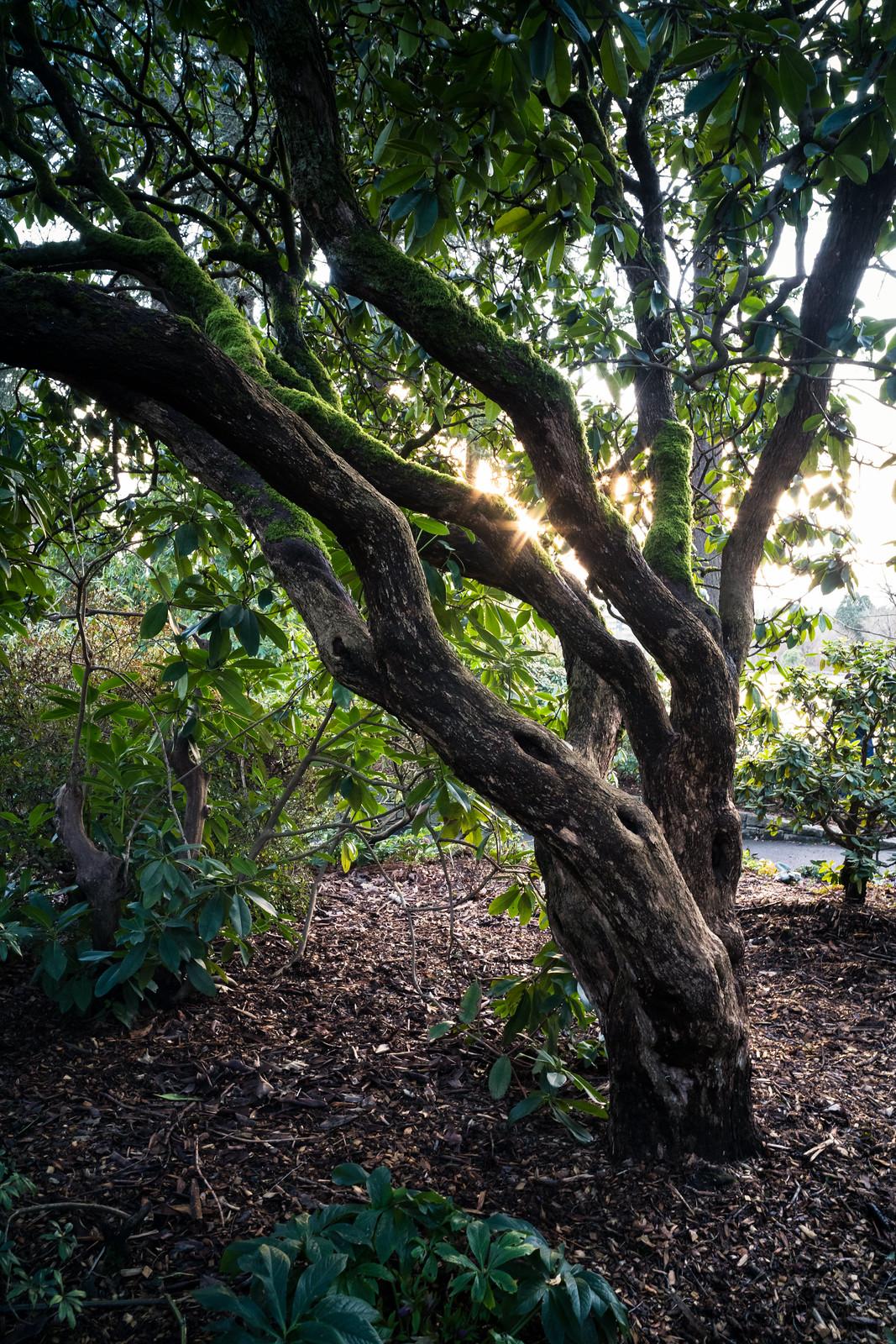Sony A7RII | Carl Zeiss Contax G 28mm f/2.8 Biogon + 1.5m PCX | f/11