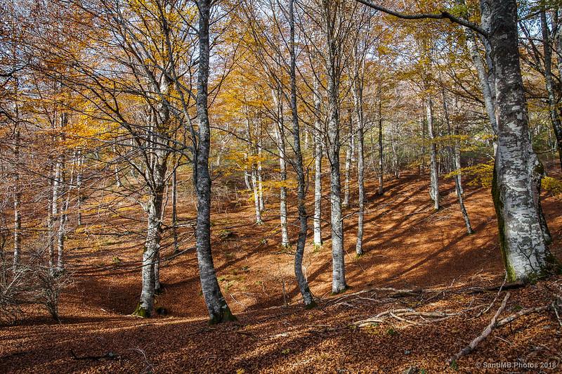 Bosque de Olaberta