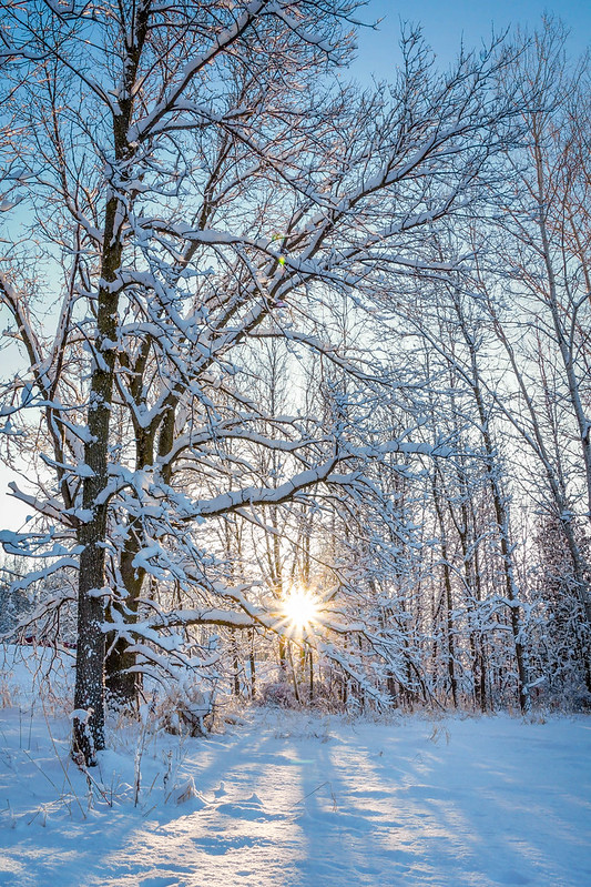 Winter, Snow, Sunrise, Sunburst, Trees, Woods