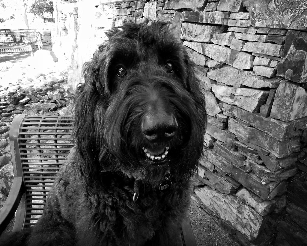 benni girl in black and white i love this photo because be flickr