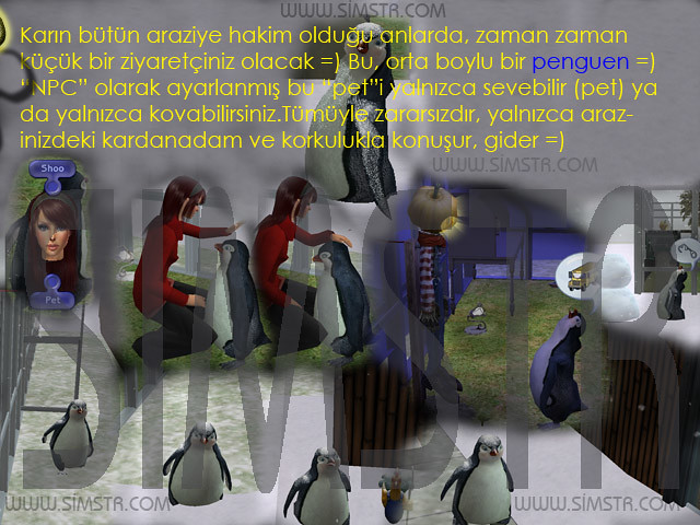 The Sims 2 Seasons Penguins Penguenler