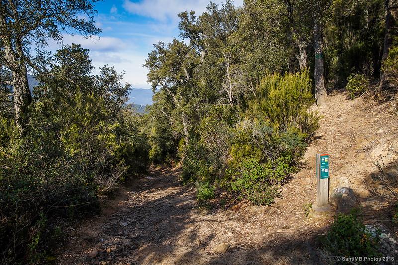 Final del camino de bajada del Castell de Montsoriu por el bosque