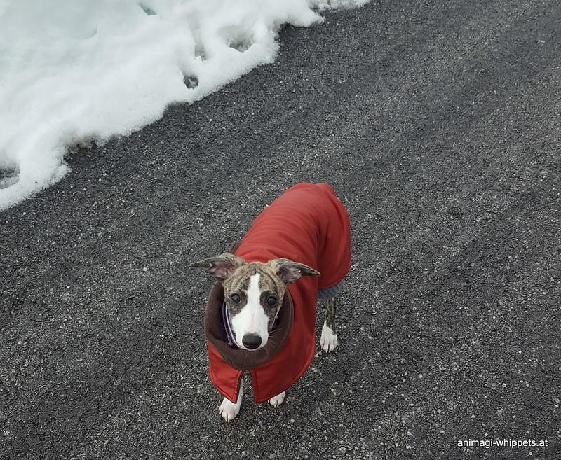 Tante Kristin hat mir diesen Mantel geschenkt, bin ich nicht modisch unterwegs?