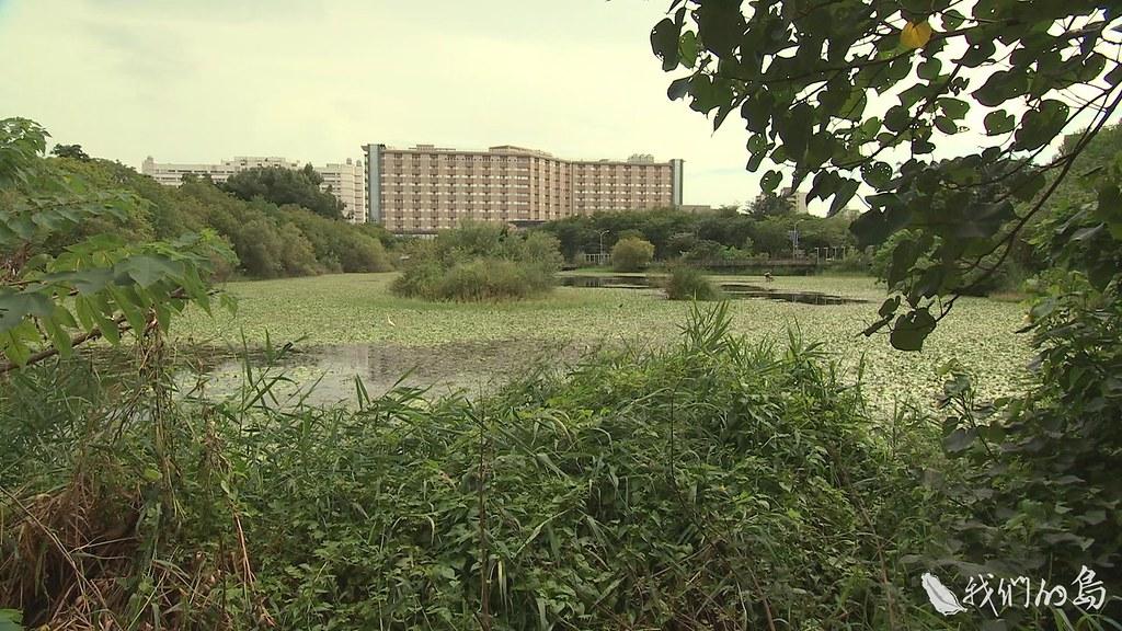 940-2-56鳥松濕地是全台第一座濕地公園,專家學者、公部門、生態團體合作,嘗試找出解決之道。