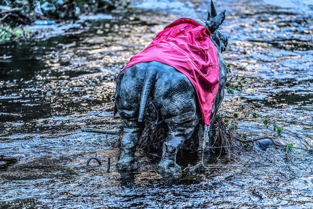 RHINO IN THE RIVER 003