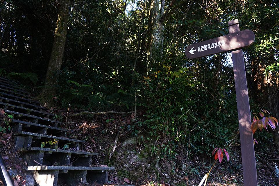 新佳阳黑森林步道