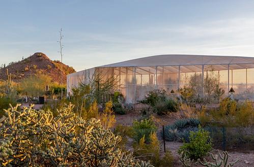 Phoenix Desert Botanical Garden Tom Conelly Flickr