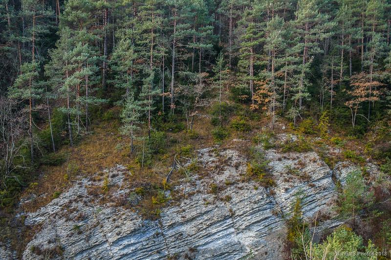 Bosque de pinos a orillas del Bastareny