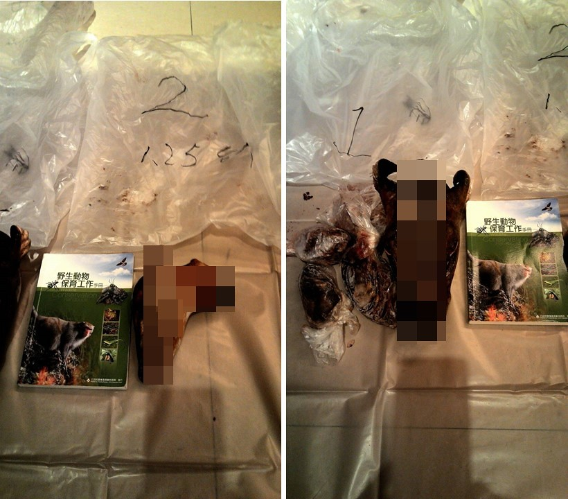 已遭肢解的台灣山羊頭。圖片來源:林務局。
