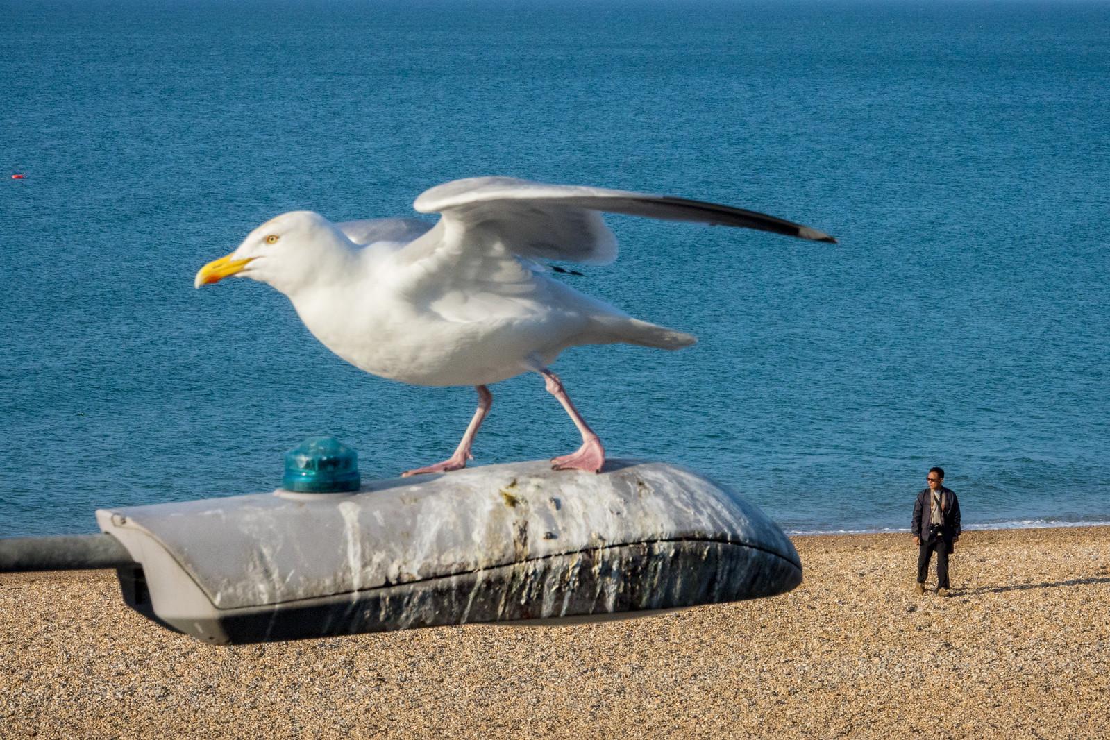 Big Bird | by Tavepong Pratoomwong