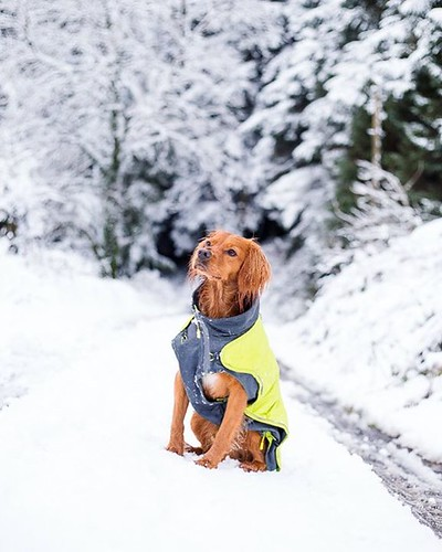 bestwoof Another's snow day here in...
