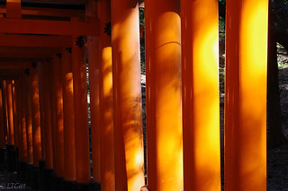 Fushimi Inari Shrine | by LTCat