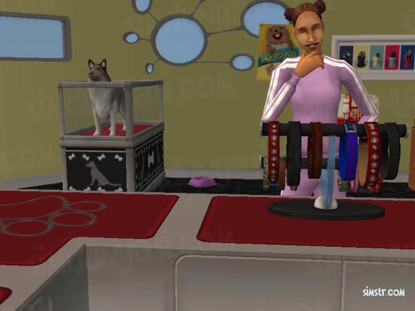 The Sims 2 Pets Buy a Collar Tasma Satın Alma