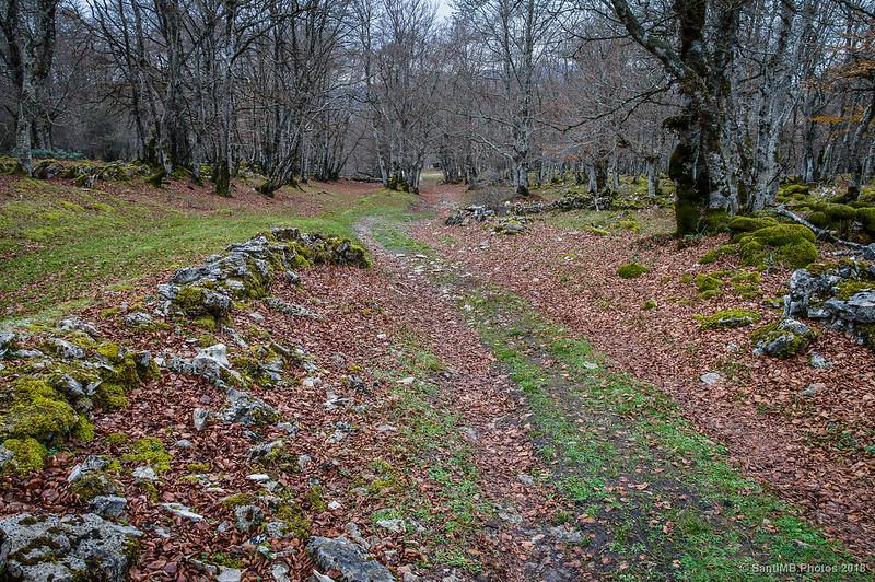 Camino en el bosque cerca de San Adrián de Lizarraga