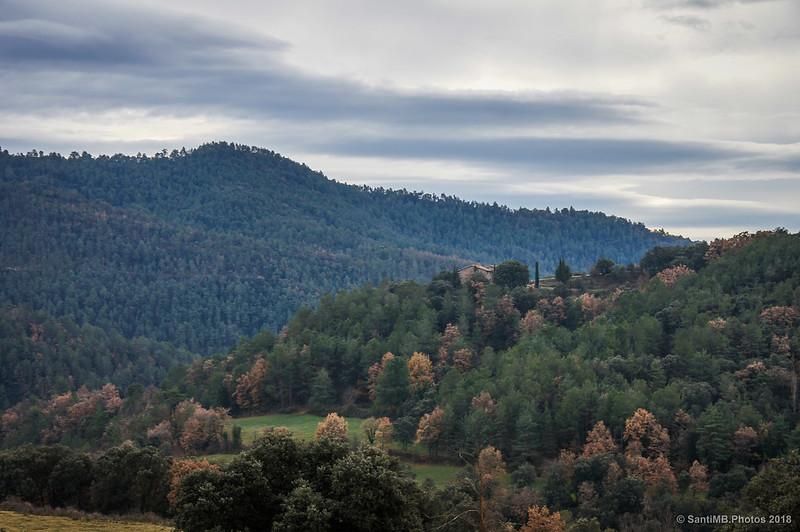 Bosques del entorno de Pedret