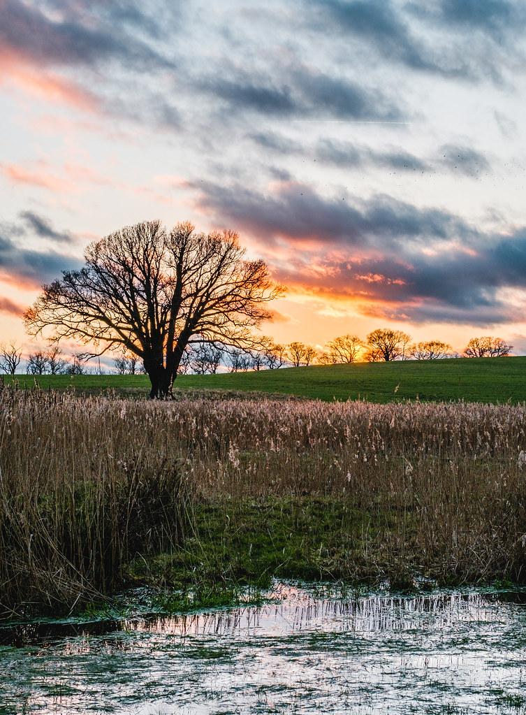 Levington Oak Tree Sunset   Matt Wadge-Smye   Flickr